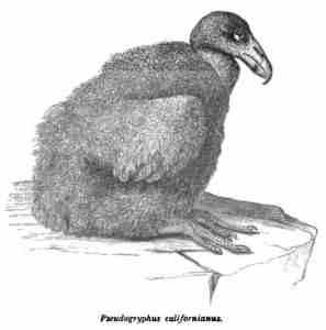 01 BBR 1974 - chick