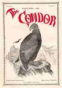 02 Condor 1900