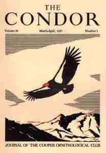 06 Condor 1947