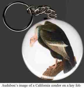 12 Audubon image - keychain