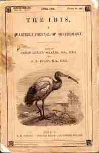1908 Ibis