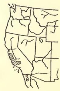 01 Wyman & Burnell 1925