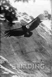 01 Birding - Feb 1978