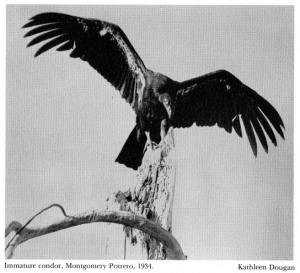 03-kathleen-dougan-ford-1986