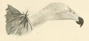 02-hazel-burnham-zlpc-1917