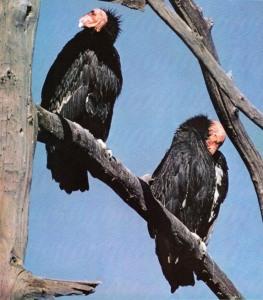 03-frederick-k-truslow-borland-1974