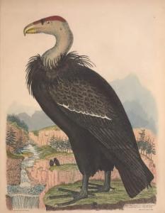 02 Brown 1835