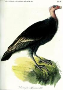 03 Lichtenstein 1838
