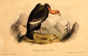 05 Townsend 1839