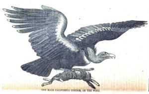 09 Taylor 1859