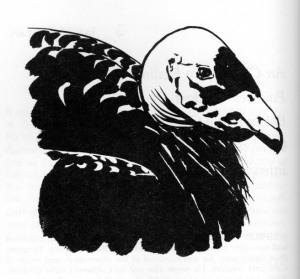 02-pearson-phillips-nash-1981