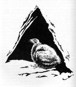 03-pearson-phillips-nash-1981