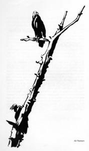 05-pearson-phillips-nash-1981