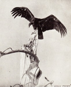 02 Dyer 1935b