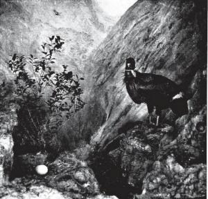 06b Diorama - Chapman 1921
