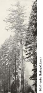 03 Form - Larsen & Woodbury 1916