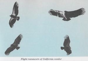 02c Audubon 1965 - montage