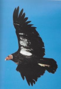 03 Weidensaul 1989