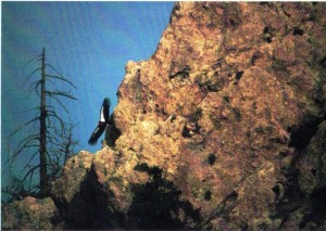 01 Tupper Ansel Blake - Emory 1989