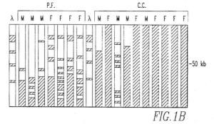 01 Figure 1b - Patent 5679514
