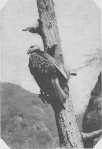 01 Cochran 1927