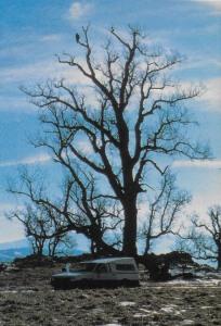06a Smith 1988 - a