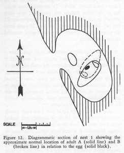 Koford 1953 - Diagram 2