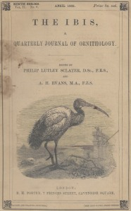 03 Ibis - front cover