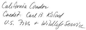 02b Koford 1981 - b