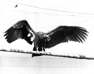 03a ZSSD 1985 - a