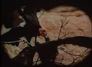 03 Binocular view - feeding
