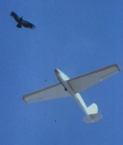 06 Condor & sailplane