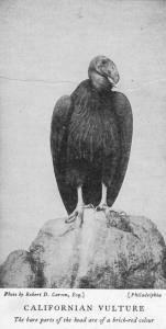 01 Cornish 1909