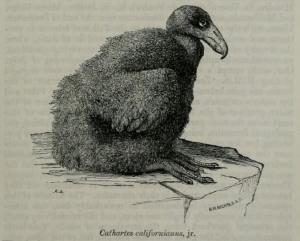 02b Baird 1868