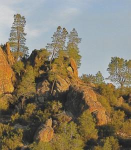 08 Rocky woodland