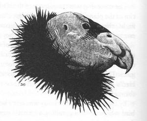 01b Dunne 1995 - Illustration