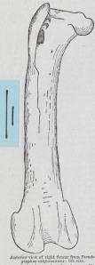 05 Femur