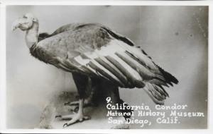 09a Postcard - San Diego NHM