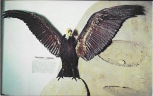 10a Postcard - San Bernardino Co Museum