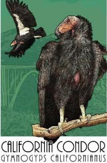 10 Wildlife Art by Roger